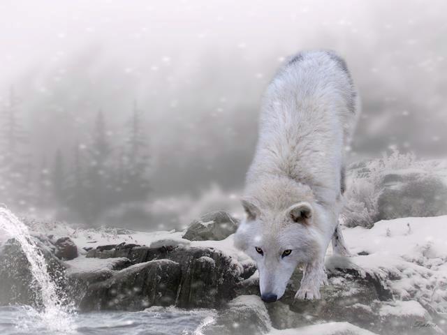 Wolfdography